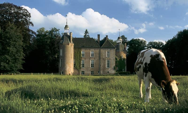 Kasteel Hackfort met op de voorgrond een koe