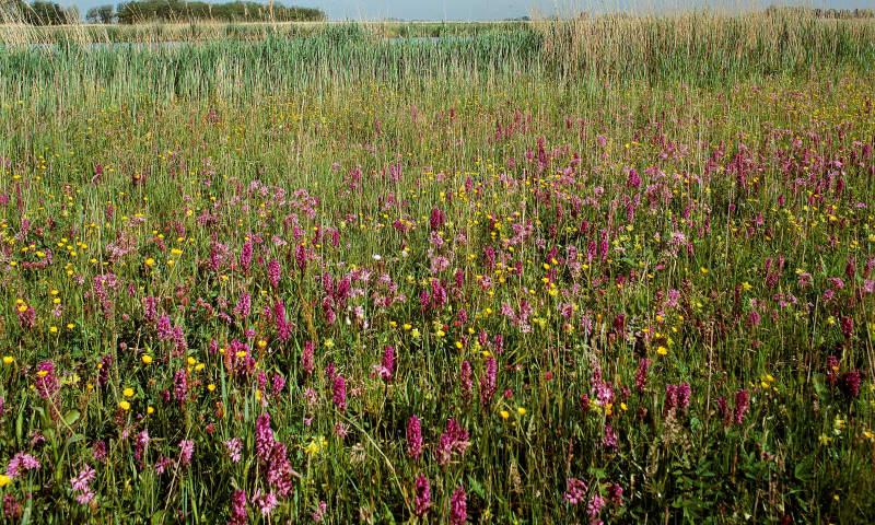 Vlietlanden, bloemgrasland Natuurmonumenten