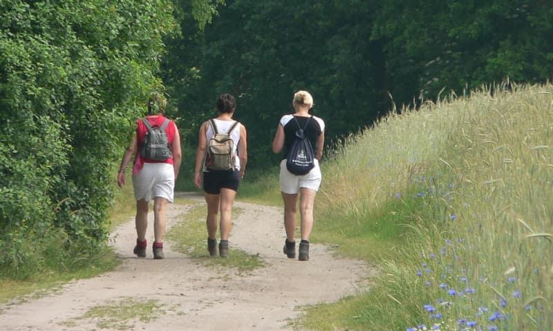 Groene route - Sprengenberg Sallandse Heuvelrug