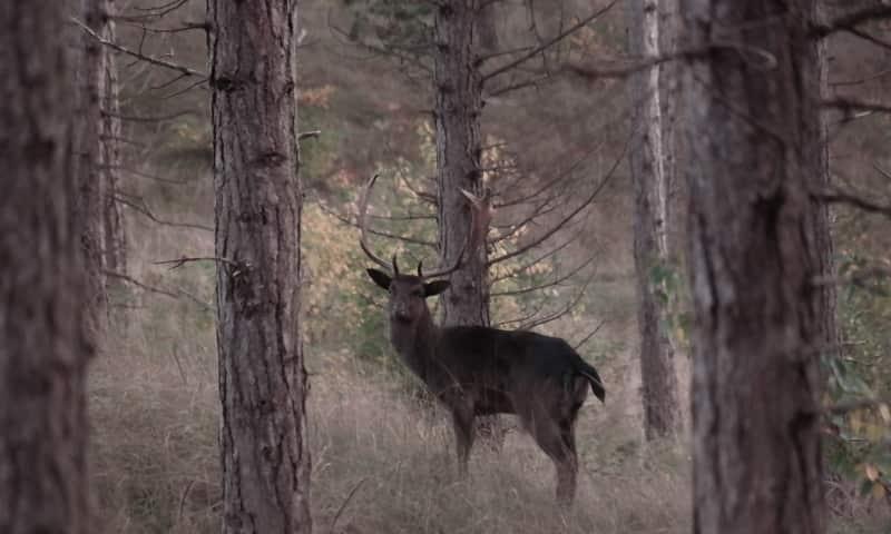 Avondwandeling Wild speuren op de Veluwe