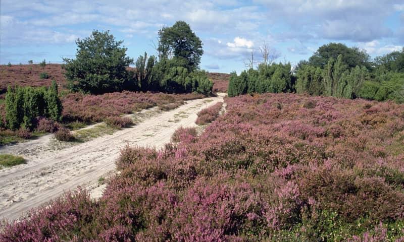 Woeste Route De Sprengenberg