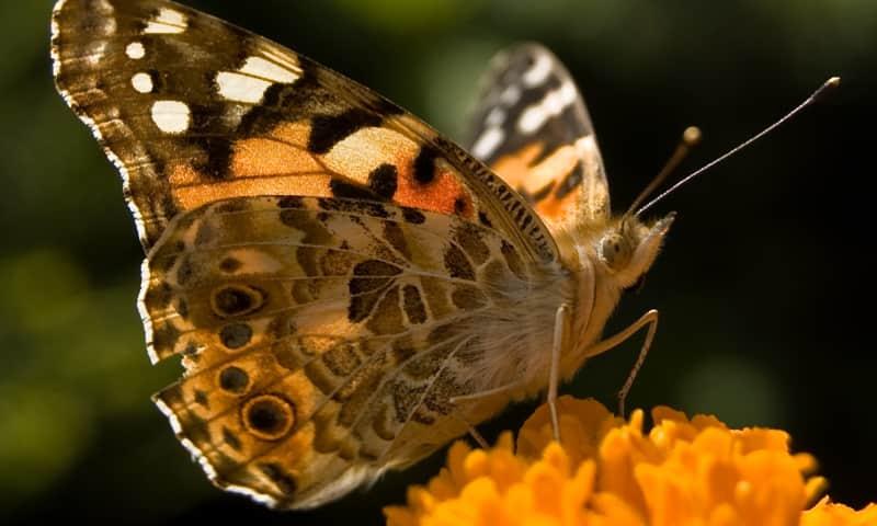 Vlinder spotten op Huis ter Heide