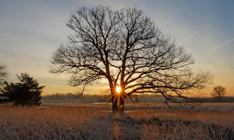 Winterwandeling op de heide van Kampina