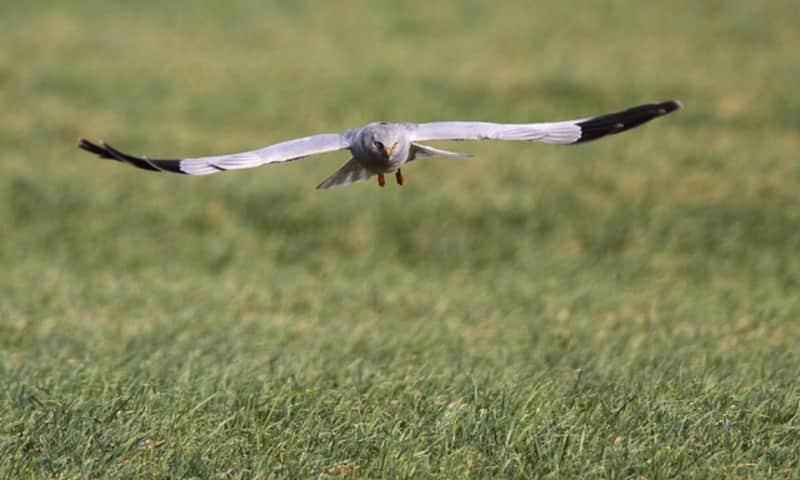 Roofvogels spotten op Tiengemeten
