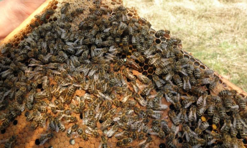Bijenstation
