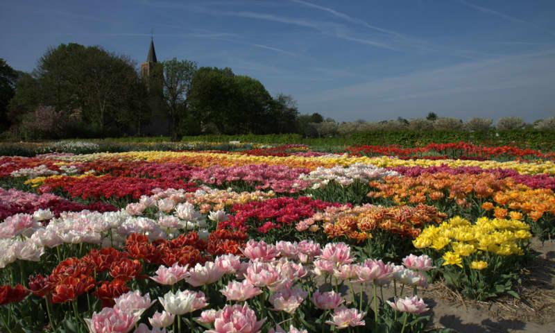 Voorjaarsbloeiers in Noord-Holland