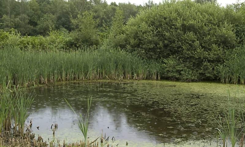 Kikkerpoel op landgoed Leusveld