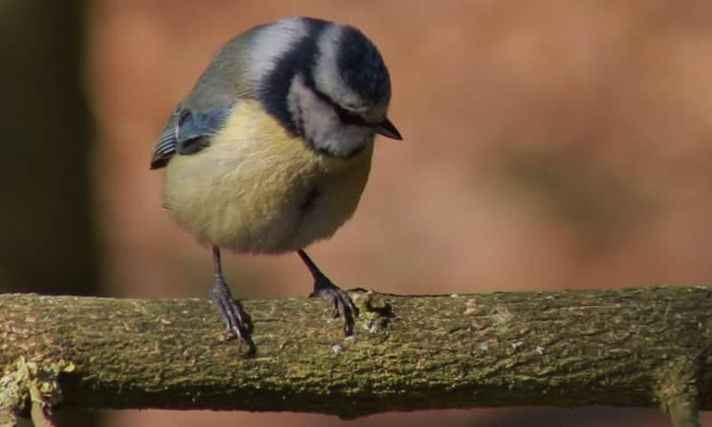 Paasvogels en ontluikende natuur