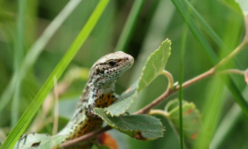 Wandeling op zoek naar reptielen - Wooldse Veen