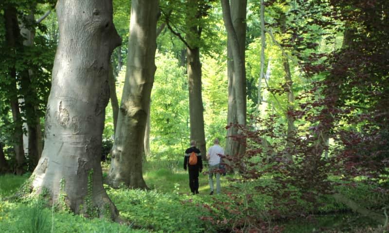 Nijenburg wandelbos