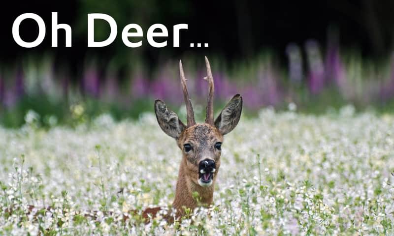 Oh Deer 404