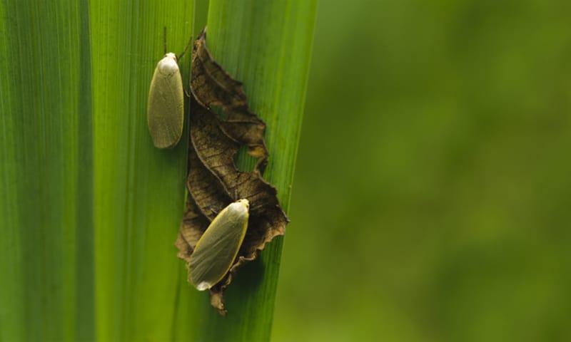 Voornes Duin nachtvlinder