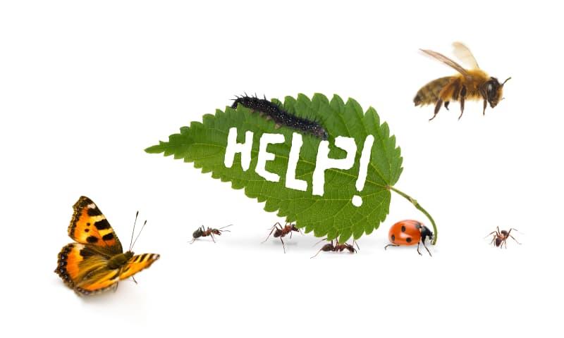 Red onze insecten