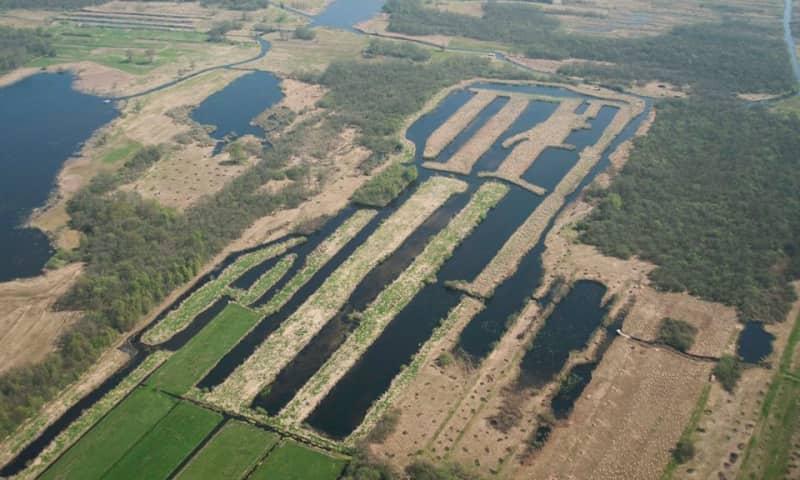 Herstel laagveenlandschap in De Wieden (PAS)