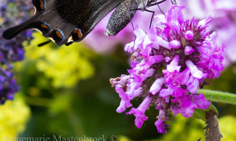 Speurtocht voor ouders naar vlinders en bloemen
