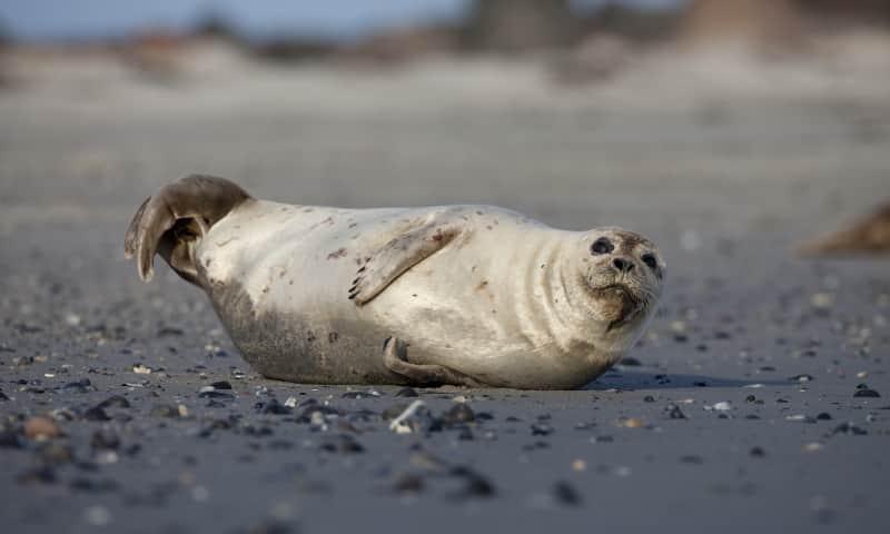 Zeeuws Wadlopen
