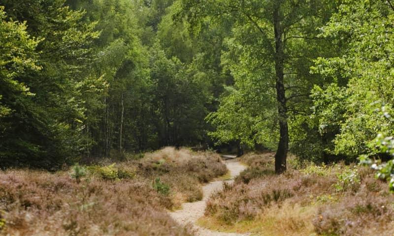 Variatie heide en bos Kaapse Bossen