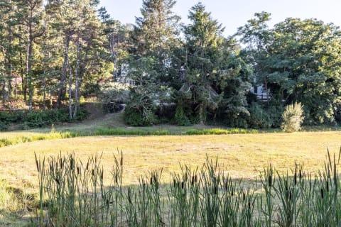 Bog and Fresh Brook Cattails