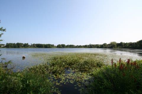 Cobs Pond