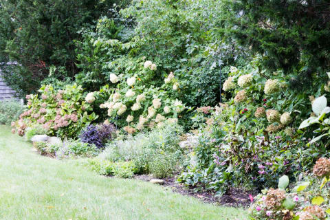Lush and Colorful Perennial Garden