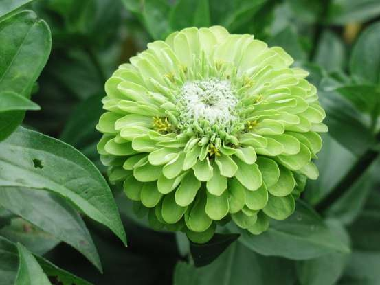 10. Green flowers suggest what?