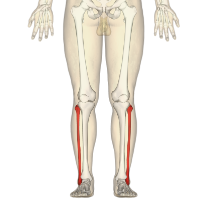 7. Which bone is this?