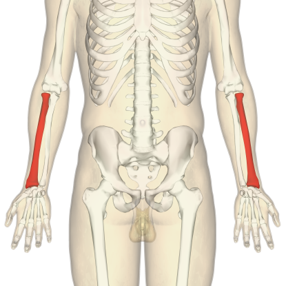 9. Which bone is this?