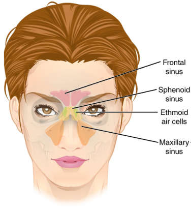 14. A sinus infection will clog your nose, but it won