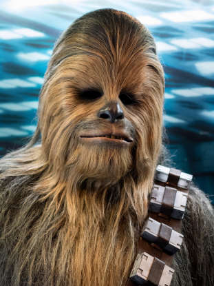 15. What is the name of the species of sea-dwelling bird found on Ahch-To (that later make friends with Chewbacca)?