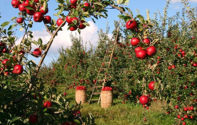 29. 3 kilograms of apples cost $9 and 5 kilograms cost $15. How much is a kilogram of apples worth?