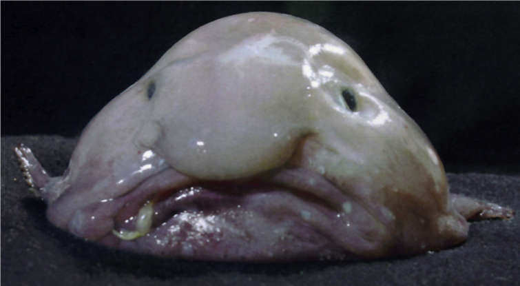 4. Which deepwater creature is this?