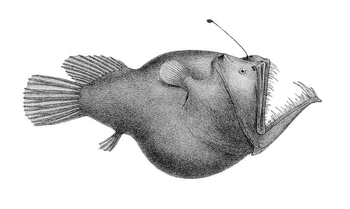 5. Which deepwater creature is this?