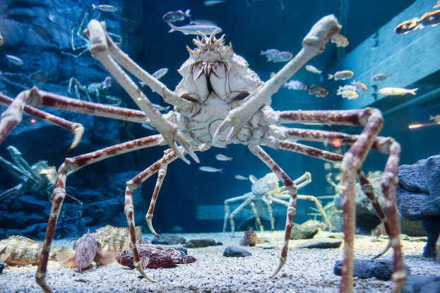 11. Which deepwater creature is this?