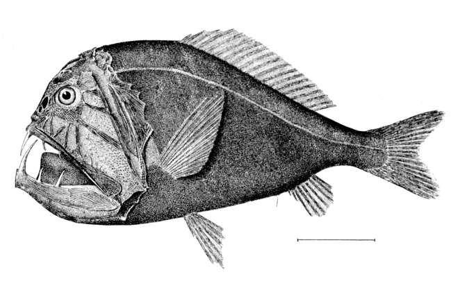 10. Which deepwater creature is this?