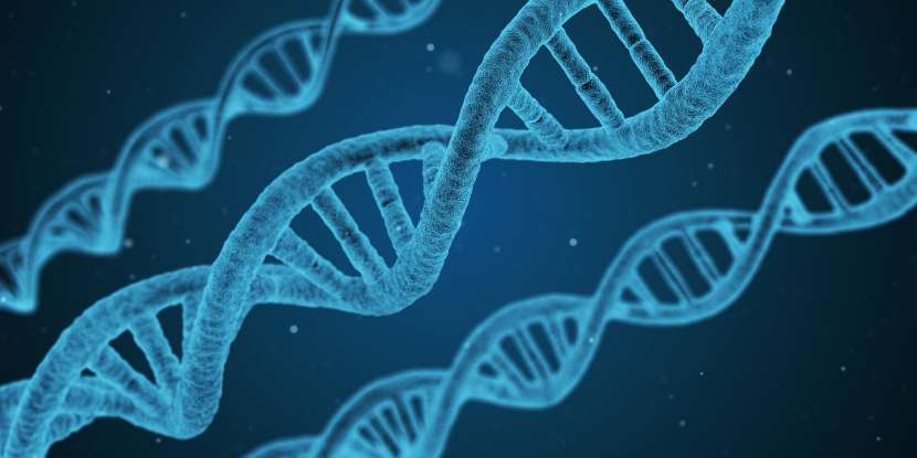 4. Who is known as the father of genetics?
