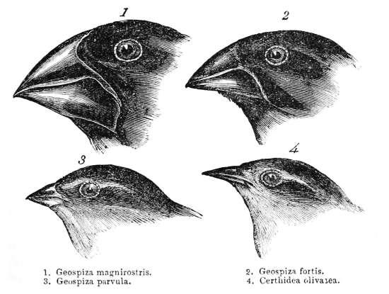 5. Charles Darwin