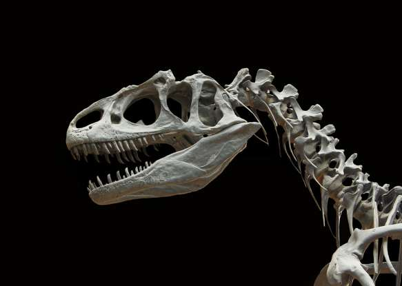 6. During which time period did dinosaurs emerge?