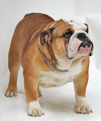 4. Which dog breed is this?