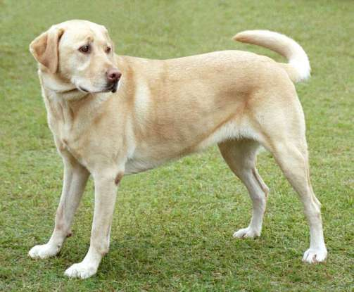 5. Which dog breed is this?