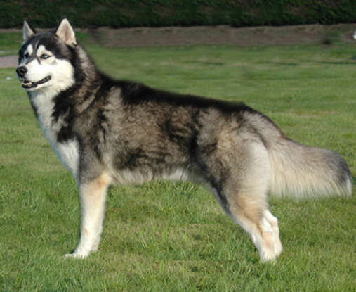 8. Which dog breed is this?