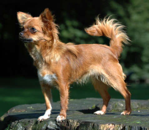 7. Which dog breed is this?