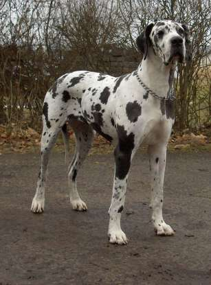 13. Which dog breed is this?
