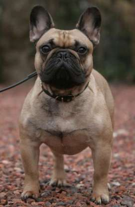14. Which dog breed is this?