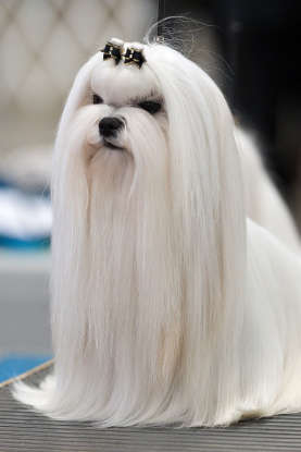 18. Which dog breed is this?