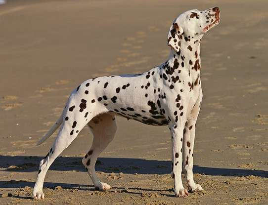 19. Which dog breed is this?