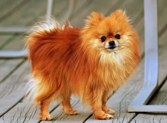 21. Which dog breed is this?
