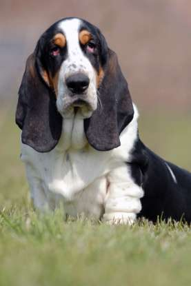 23. Which dog breed is this?