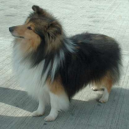 28. Which dog breed is this?