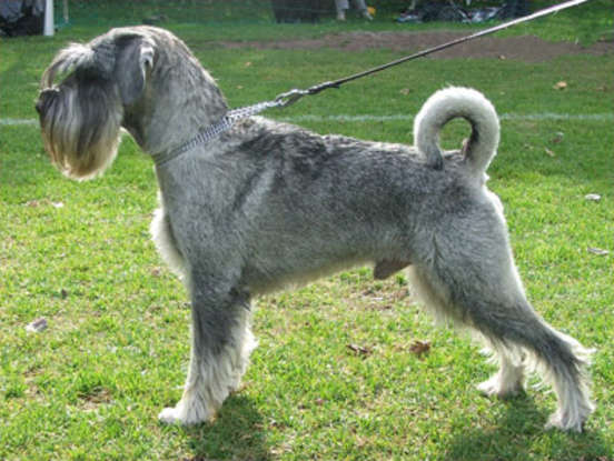 32. Which dog breed is this?