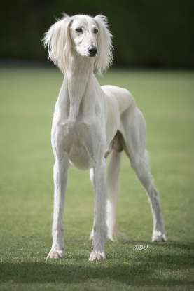 37. Which dog breed is this?